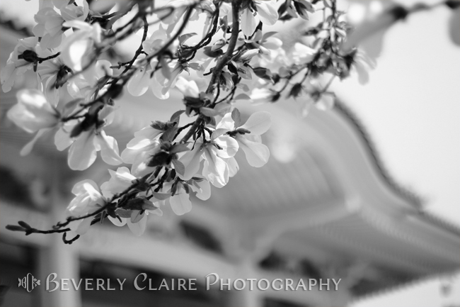 Buddhist Temple in Black and White – Spring White Flowers