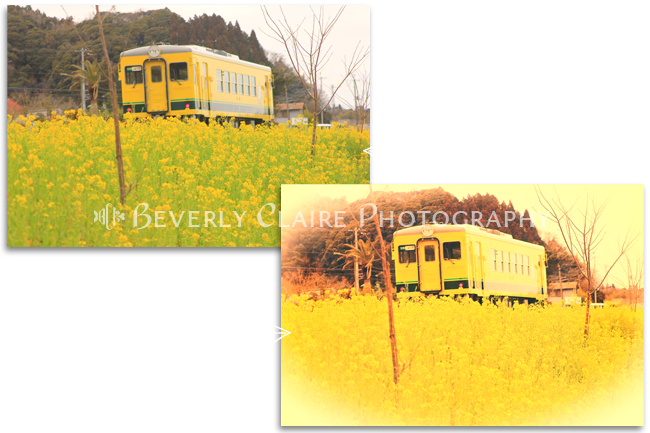 Bright Yellow Train And Cheerful Field Mustard Before and After