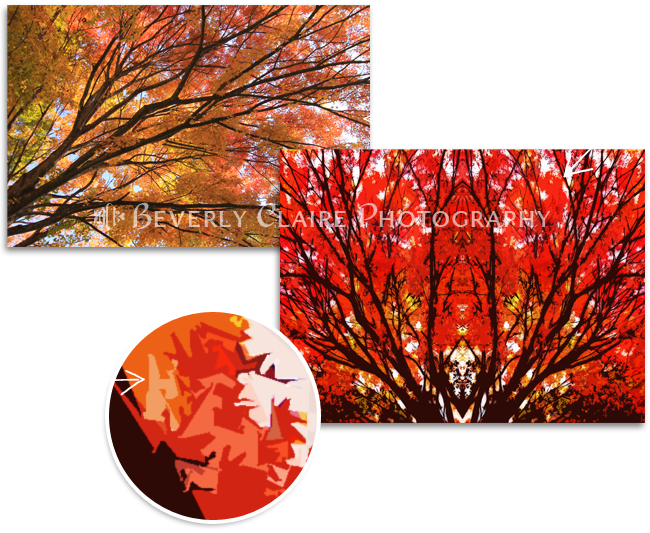 Stylized Maple Tree with Vivid Autumn Leaves Before After