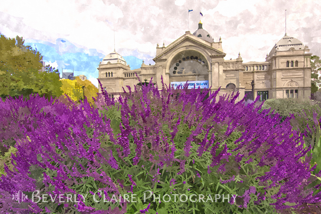 Royal Exhibition Building with Purple Salvia Maynight