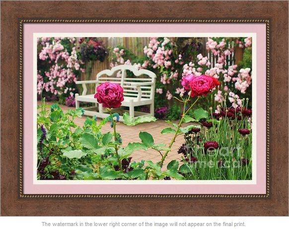 White Bench and Pink Climbing Roses in English Garden by Beverly Claire Photography