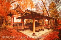 Temple Among Vivid Autumn Leaves in Yamanashi