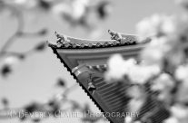 Buddhist Temple in Black and White – Roof Tile Details