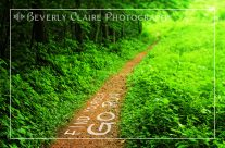 Find Yourself Go Run Forest Path Motivational