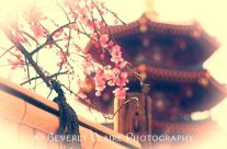 Pagoda and Plum Blossoms with Bamboo Fence