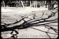 Spooky Tree Shadow in Black and White