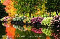 Beautiful Park with Autumn Trees & Colorful Flowers