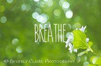Breathe Refreshing Hydrangea with Green Leaves and Bokeh