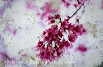 Deep Pink Flowers with Grey Concrete Texture Background