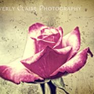 Single Red and White Rose with Vintage Concrete Background
