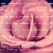 Lovely Pink Rose with Vintage Handwriting