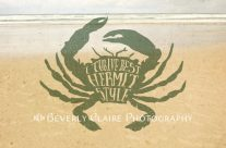 I Thrive Best Hermit Style Typography Crab